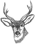 Deer head picture